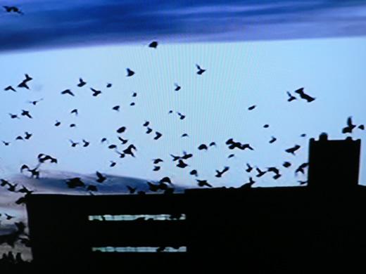 les-oiseauxt.1215653811.jpg