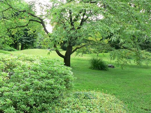 vert-dominantt.1293800047.jpg